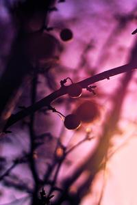 Spring Season Plant Tree 5k