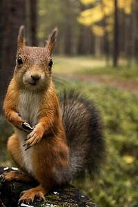 240x320 Squirrel Shopping Summer