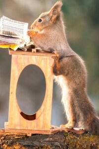 540x960 Squirrels Funny
