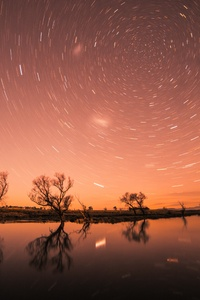 Startrail Longexposure Trees Cool