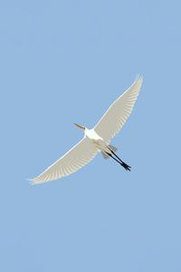 2160x3840 Stilt Bird Illustration