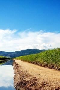 1080x1920 Sugarcane Fields