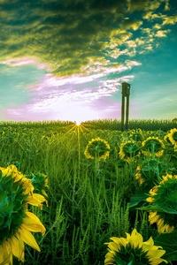 1080x2160 Sun Flower Field 5k