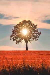 540x960 Sun Rays Behind Tree Nature 5k
