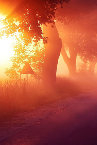 1080x2280 Sun Rays Mist Road 4k
