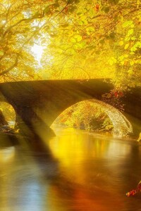 Sun Shining on Autumn Forest