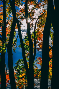 1280x2120 Sunbeams Between Trees In Autumn Season Daylight 5k
