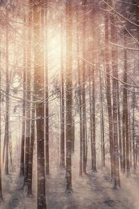360x640 Sunbeams Snowy Trees