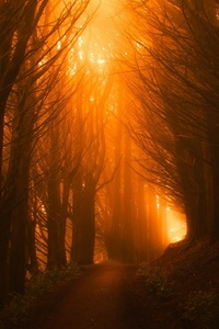 Sunlight Path Dark Beautiful Nature Trees