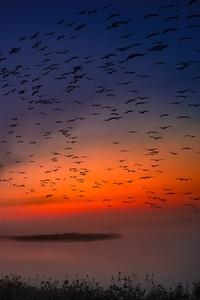 Sunrise Birds Flight 5k