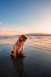 1080x2280 Sunrise Dog Ocean 5k