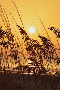 1440x2560 SunriseHuntington Beach State Park 8k