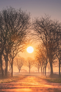 320x568 Sunrises And Sunsets Trees Sun Fog 4k