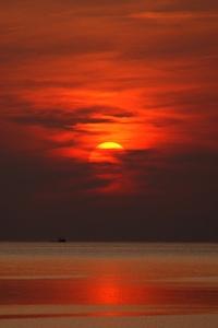 Sunset Dusk Dawn Evening Sun Birds Flying