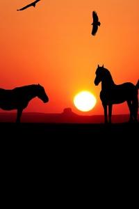 Sunset Horse Silhouette 4k