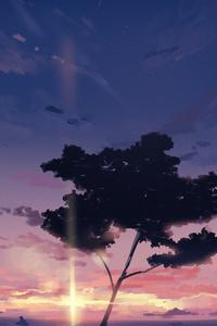 1242x2688 Sunset Sky Clouds Tree 4k
