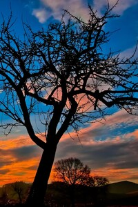 Sunset Trees Sky