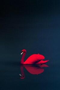 640x1136 Swan 4k