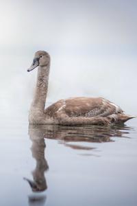 1080x2280 Swan
