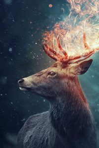 640x1136 The Deer