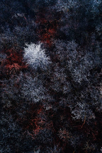 240x320 The Red Ice Forest
