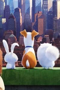 750x1334 The Secrete Life of Pets Movie
