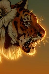 Tiger Evening Glow 5k