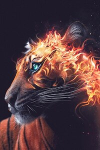 Tiger Fire Graphics