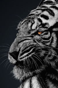 Tiger 1440x2960 Resolution Wallpapers Samsung Galaxy Note 9 8 S9 S8 S8 Qhd