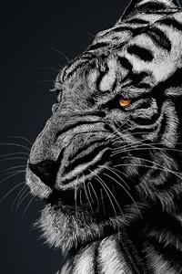 640x1136 Tiger Glow