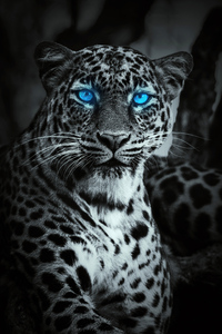 480x854 Tiger Glowing Blue Eyes