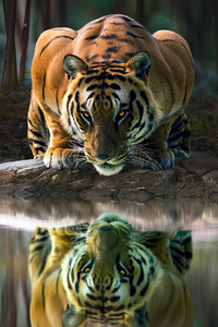 1080x2280 Tiger Glowing Eyes Drinking Water 4k