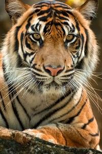 320x568 Tiger Paws 4k