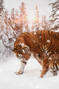 1242x2688 Tiger With Cub 8k