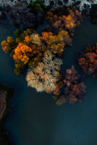 Top view of Trees at winter morning