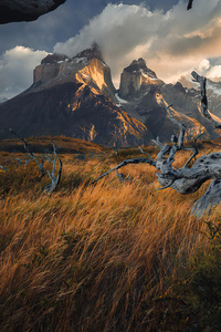 1080x2280 Torresdel Paine National Park