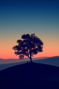 1440x2560 Tree Alone Dark Evening 4k