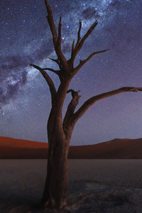 1080x1920 Tree Desert Milky Way 4k