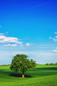 480x854 Tree Field Plain HD