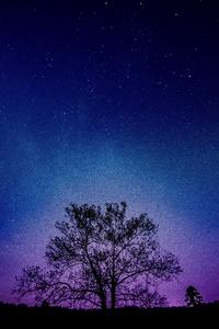 Tree Galaxy Sky 8k