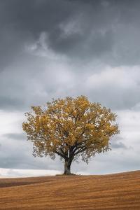 Tree Landscape 4k
