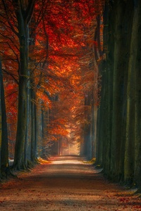 360x640 Tree Lined Winter Fall Alone Road