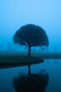 640x960 Tree Mistscape 5k