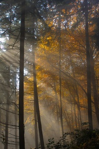 2160x3840 Tree Nature Wood Sun Fog Leaf Dawn Light