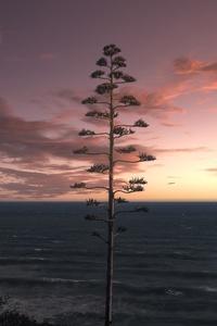 240x400 Tree Ocean Seascape Sky 5k