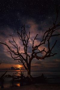 2160x3840 Tree Silhouette Milky Way Night