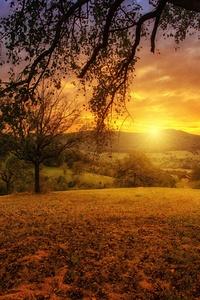 Tree Sun Aesthetic Dawn Landscape Panorama