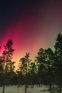 1080x2280 Trees And Aurora Rays