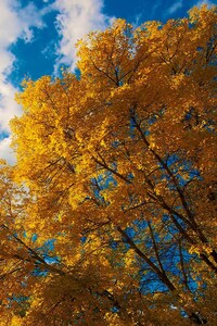 480x800 Trees Autumn Clouds