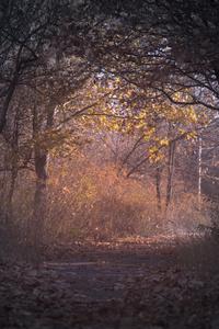 240x400 Trees Branch Pathway Dark Autumn Forest Backlit